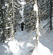 Photo of skier approaching Marshall Lake, Sawtooth Range, ID through dense forest