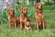 The first shot of the pack at home. L-R: Bliss, Tasha, Phanny, Sailor