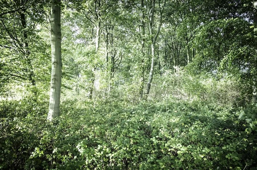 Woodland Sounds: Dawn Chorus