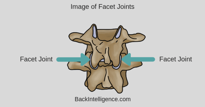 Facet Joint Image