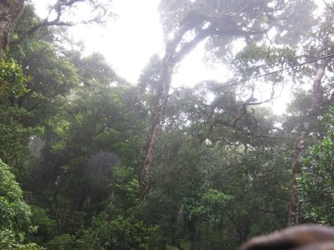 Dieser wunderschöner Regenwald