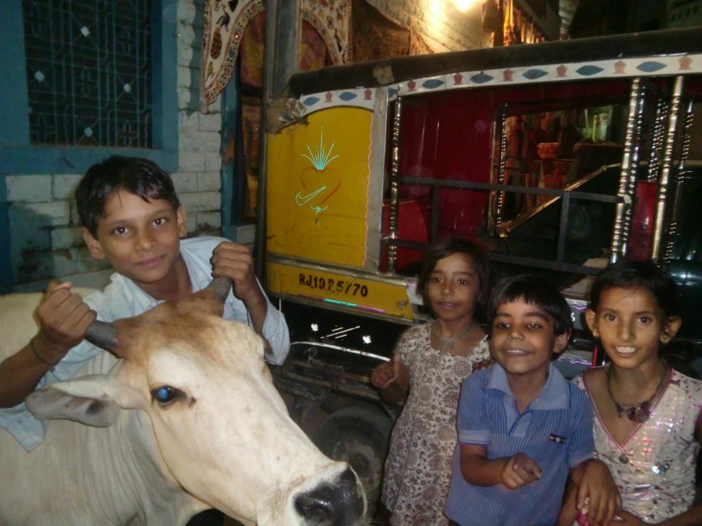 親しみやすいインドの牛