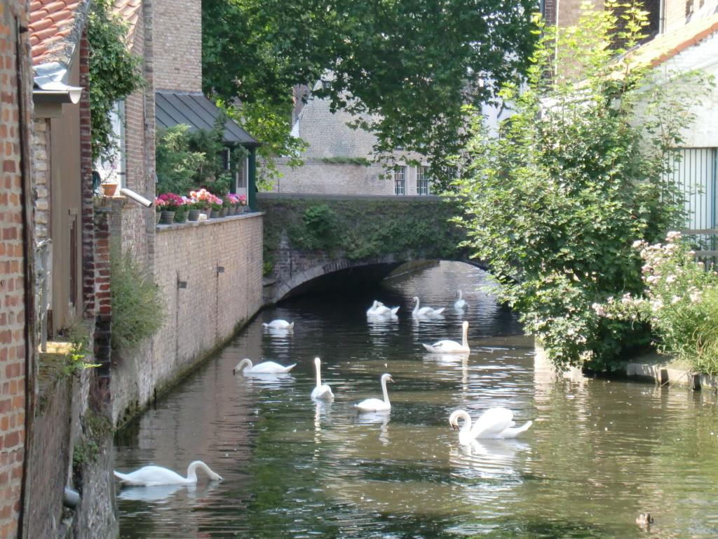 自然と白鳥が風景に馴染むブリュージュの街並