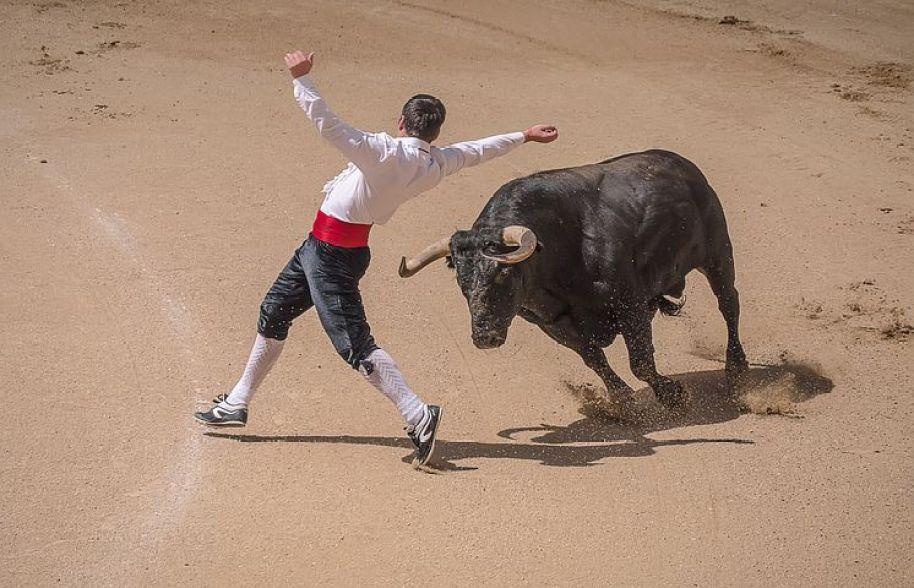マドリードでは、国技である『闘牛』や代表的な民族舞踊『フラメンコ』も有名
