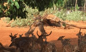 鹿の大乱闘