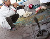 Snake charmers in Morocco