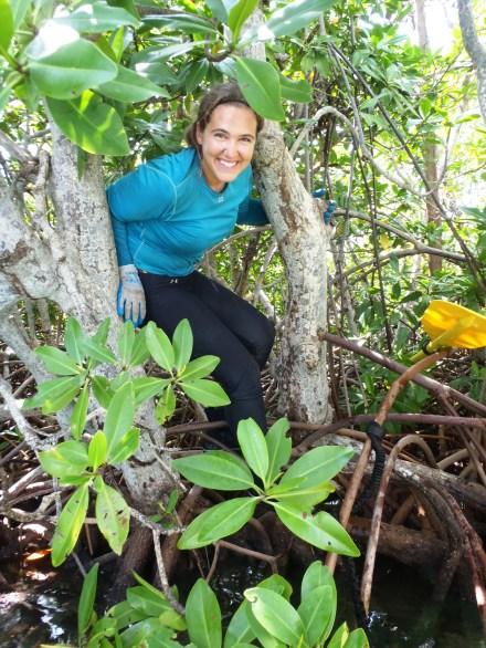 Climbing trees in Puerto Rico