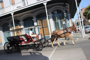 Fringed surreys drawn by mules near the French Market