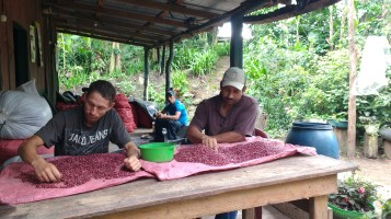 Sorting the frijoles