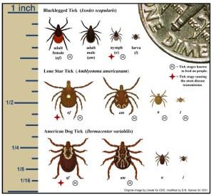 Tick Chart