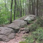 Mashapaug Pond View Trail