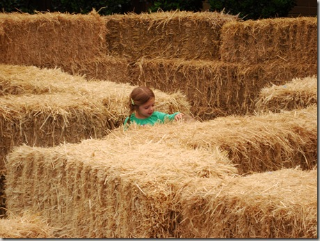 """You can't see him, but there's a tiny man there and Erin is telling him """"You must be this tall to walk the bale maze. Get out."""""""