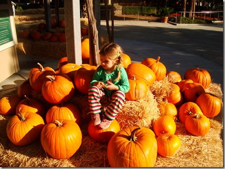 Free toddler with the purchase of any four pumpkins.