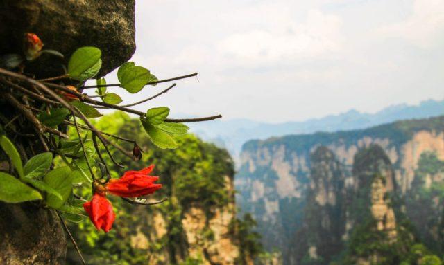 Visiting Zhangjiajie National Forest Park, Hunan Province, China