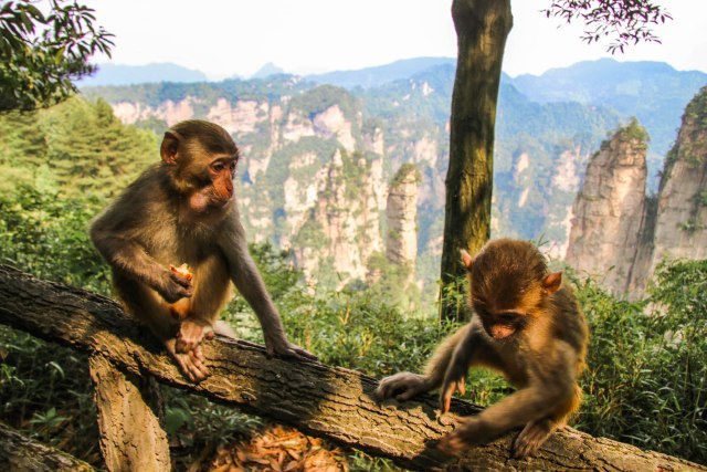 The Best Guide for Visiting Zhangjiajie National Forest Park in China