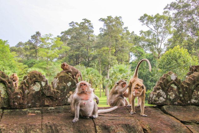 Monkeys at Angkor Thom, Cambodia