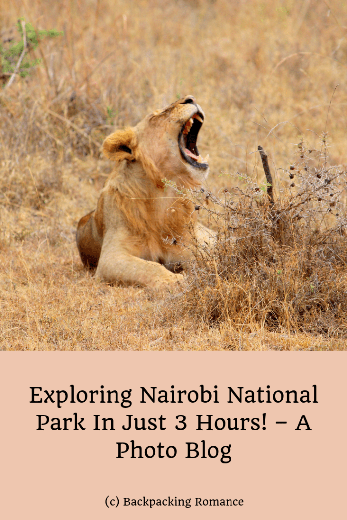 Exploring Nairobi National Park In Just 3 Hours! – A Photo Blog