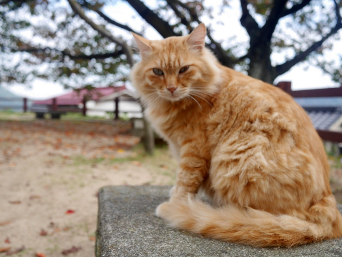 One of the many cats in Mt. Senkoji's slope.