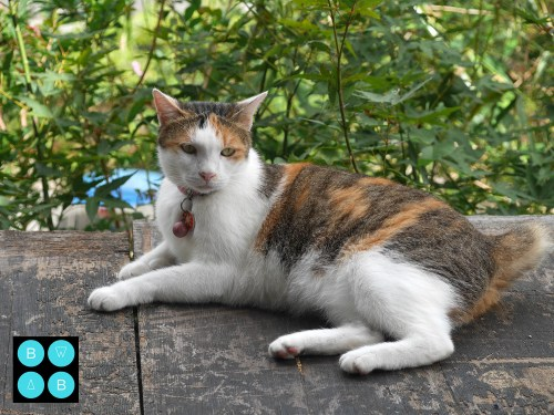 Taipei Travel Guide Houtong Cat Village.jpg