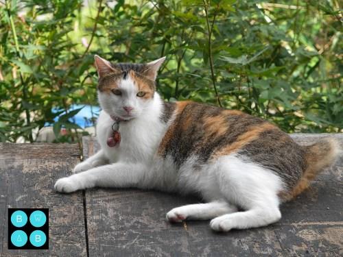 Taipei Travel Guide Houtong Cat Village.jpg