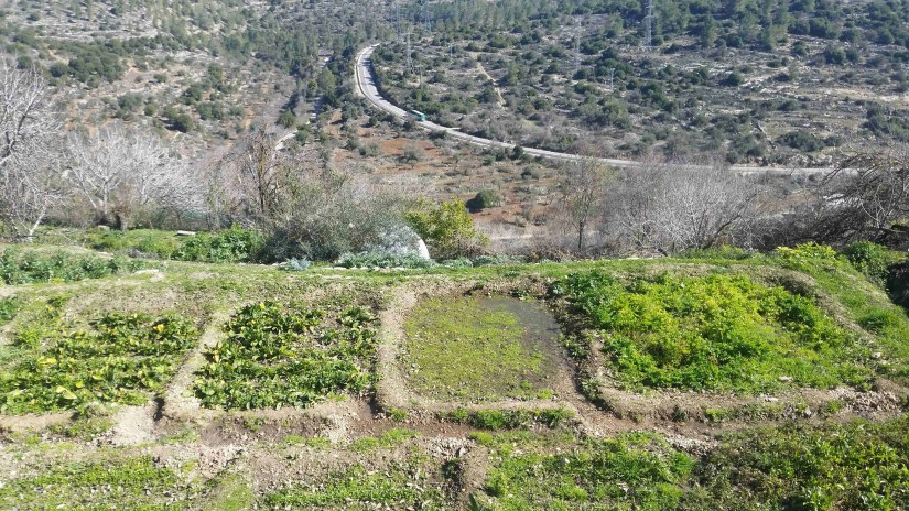 Ancient Terraces Still Mantained Today