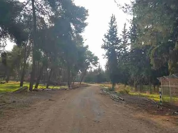 Walking through the the Giv'at Koah Forest on the Israel National Trail