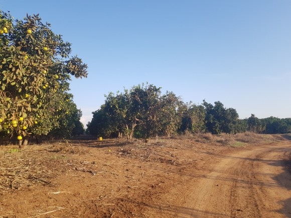 Orchards on the Israel National Trail