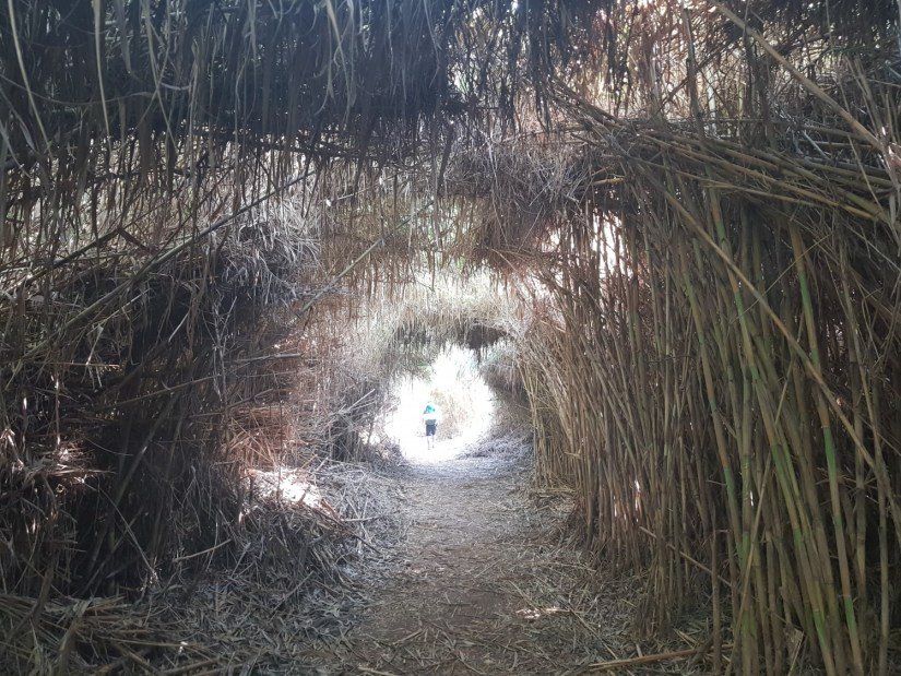 Shaded passage on the Israel National Trail near the Yarkon River