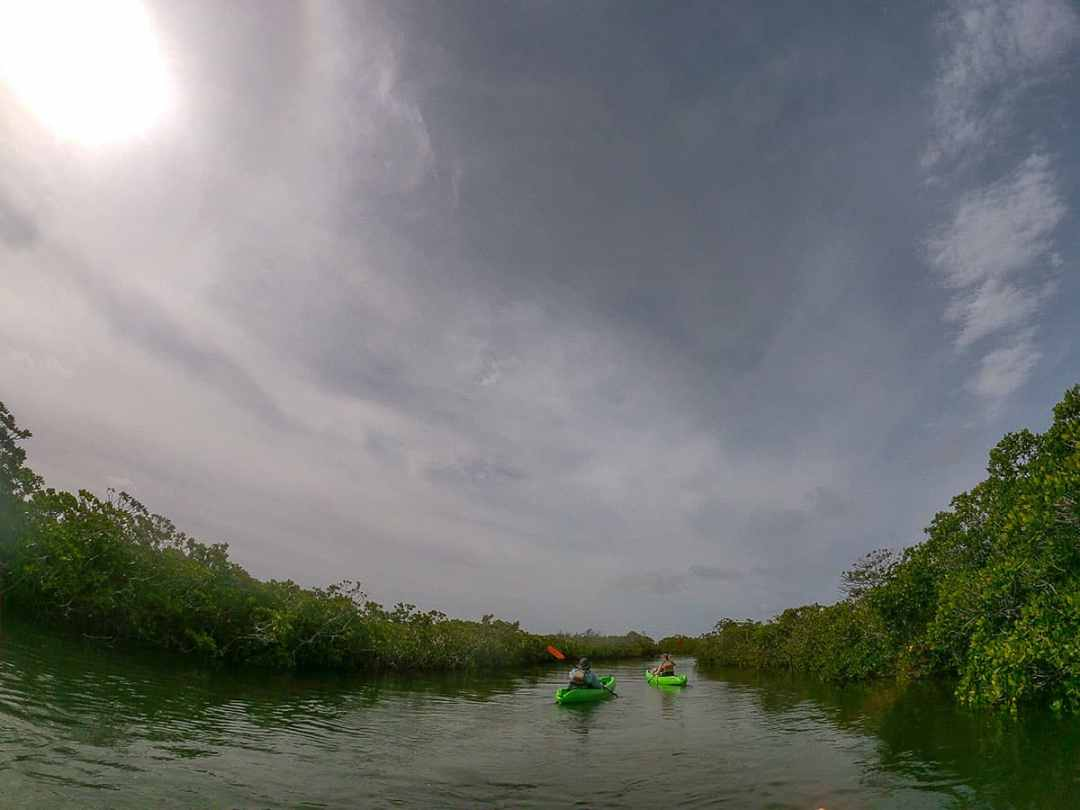 How to spend two days in Key Largo: kayak through the mangroves in John Pennekamp State Park
