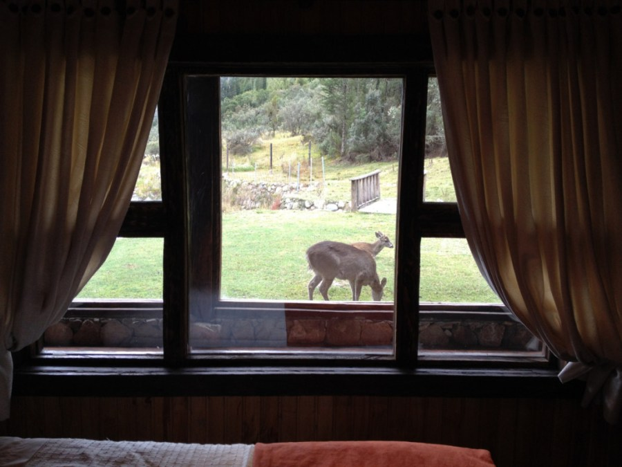 deer through a hotel window