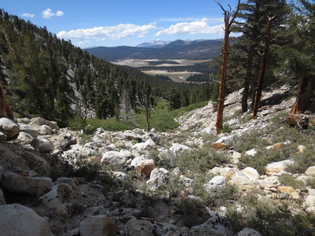 The view from Cottonwood Pass