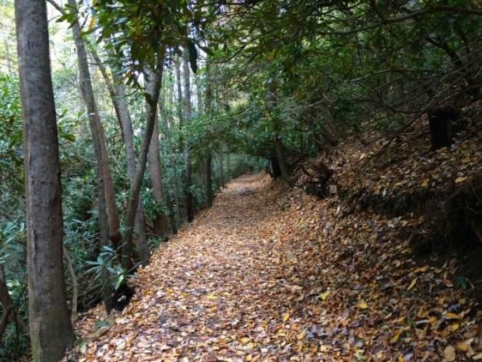Trail to High Shoals Creek Falls