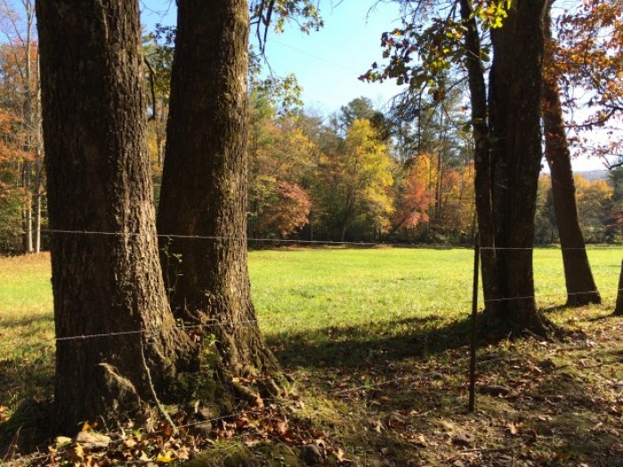 Autumn Pasture Georgia
