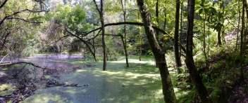 Devil's Millhopper Flooded