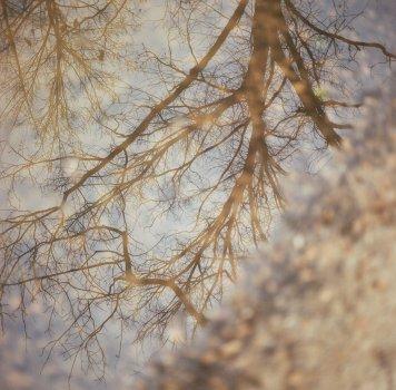 Rodney Mississippi Flood Tree Reflection
