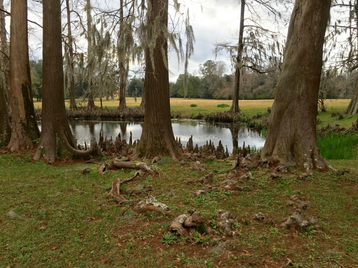 Melrose NPS Natchez Mississippi Cypress Pond