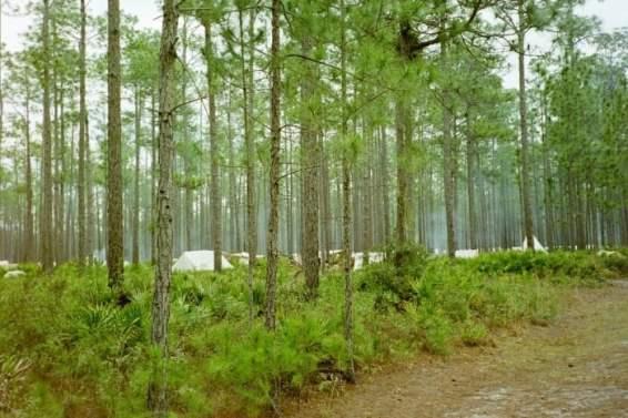 frame007 - 8 Living History & Historical War Reenactments in Florida