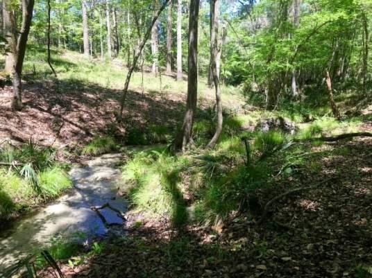 Bell Springs Creek Florida