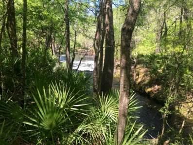 Robinson Branch Falls Florida