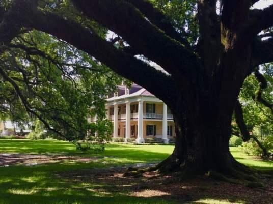 Houmas House and grandfather live oak tree