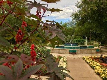 red castor bean plant and fountain