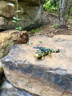 gecko and dragonfly garden art