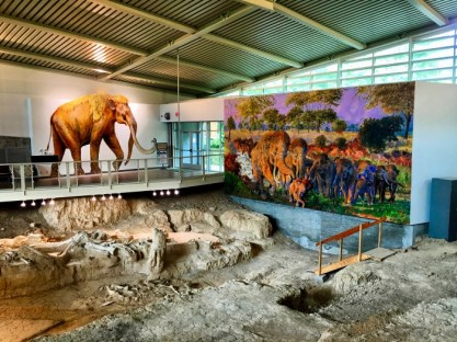 Waco Mammoth National Monument fossils