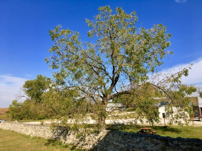 stone wall and tree