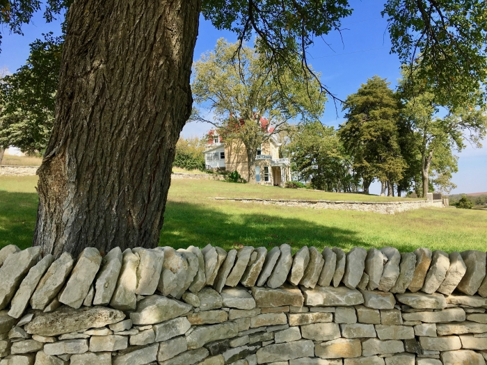 stone wall, tree, and