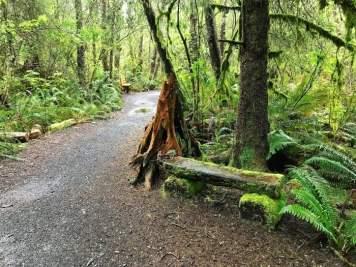 IMG 3617 - Tillamook: A Drive Along the North Oregon Pacific Coast
