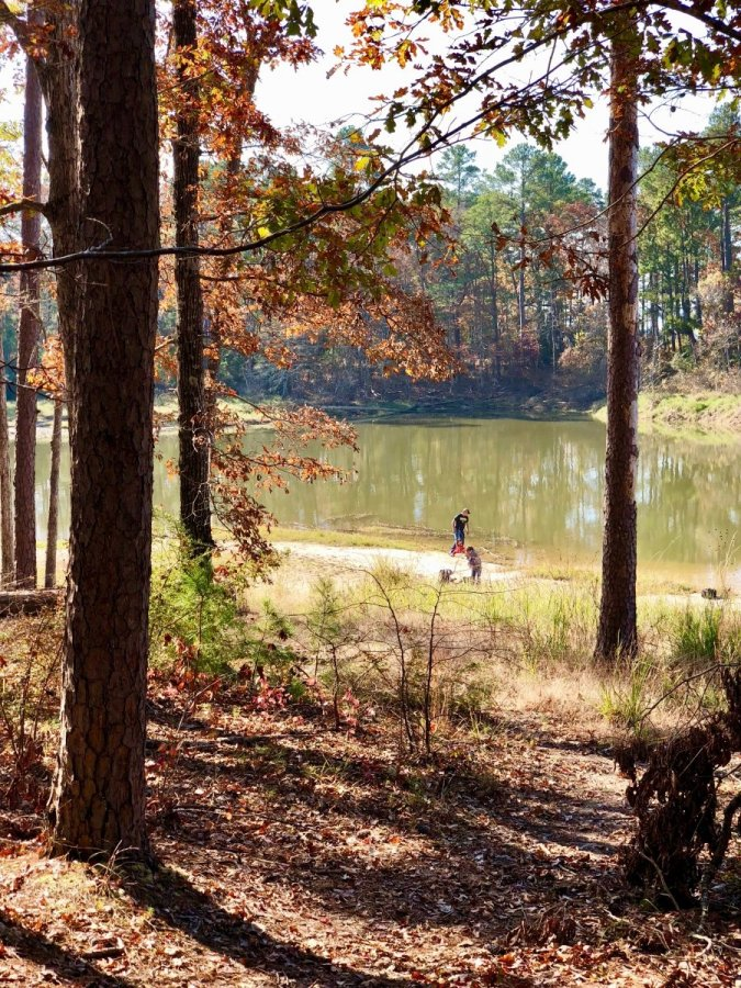 IMG 9967 - Discover Outdoor Adventure at Toledo Bend Lake & Sabine Parish, Louisiana