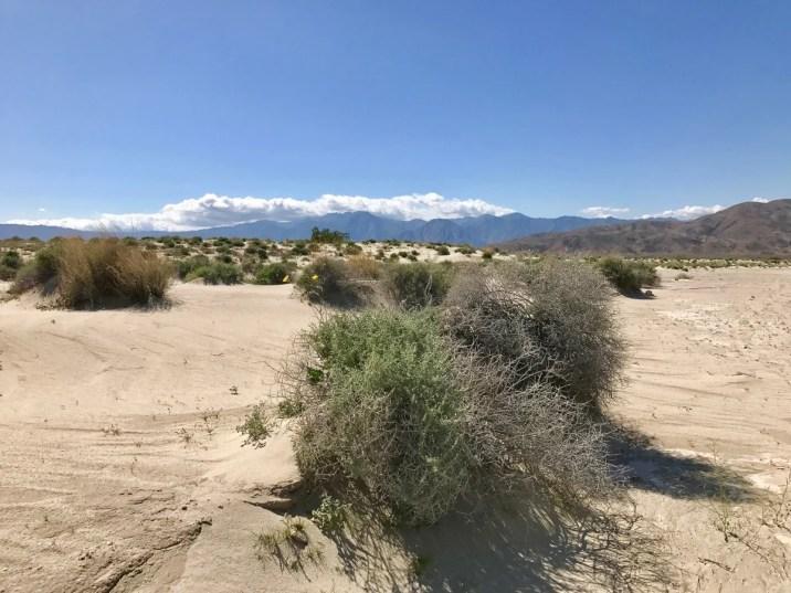 IMG 2289 - Wildflower Chasing at Anza-Borrego Desert State Park California