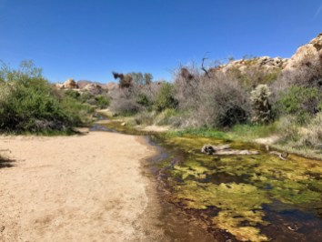 IMG 2468 - Best Hikes in Joshua Tree National Park on a One-Day Trip