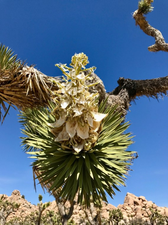 IMG 2494 - Best Hikes in Joshua Tree National Park on a One-Day Trip
